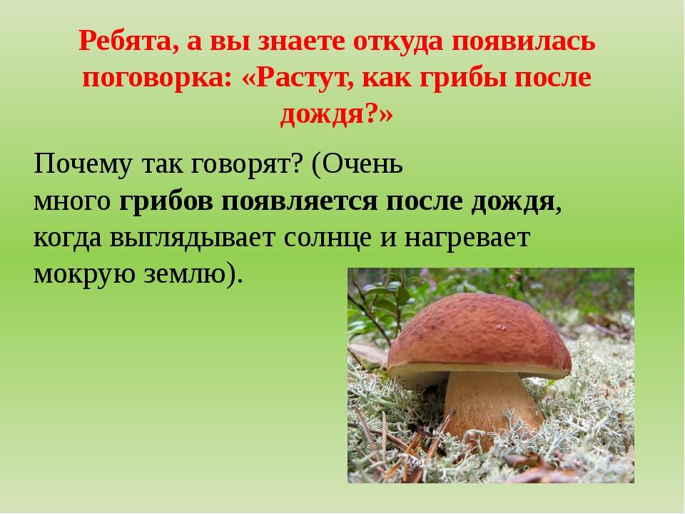 Ребята, а вы знаете откуда появилась поговорка: «Растут, как грибы после дожд...