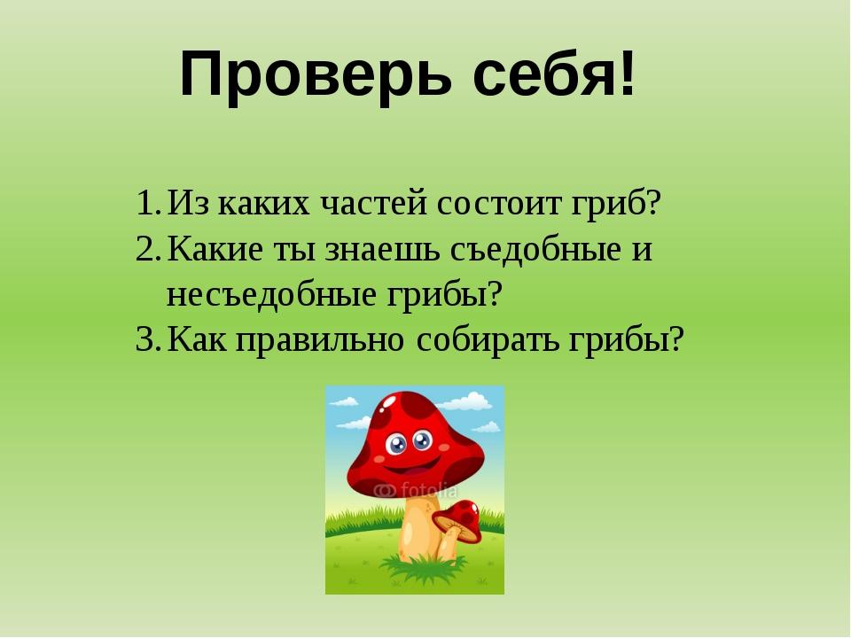 Проверь себя! Из каких частей состоит гриб? Какие ты знаешь съедобные и несъе...