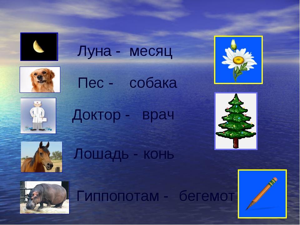 Луна - месяц Пес - собака Доктор - врач Лошадь - конь Гиппопотам - бегемот