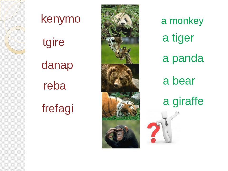 kenymo tgire a panda danap a bear reba a giraffe frefagi a tiger a monkey