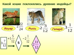 Какой кошке поклонялись древние индейцы? Ягуар 5 Гепард