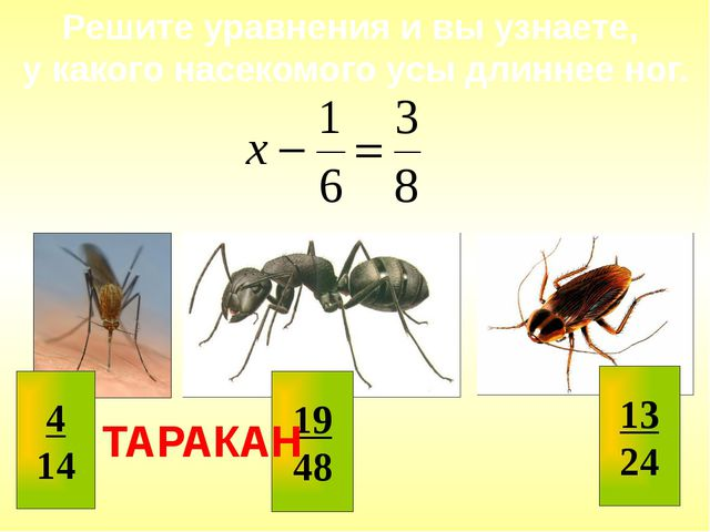 Решите уравнения и вы узнаете, у какого насекомого усы длиннее ног. ТАРАКАН...