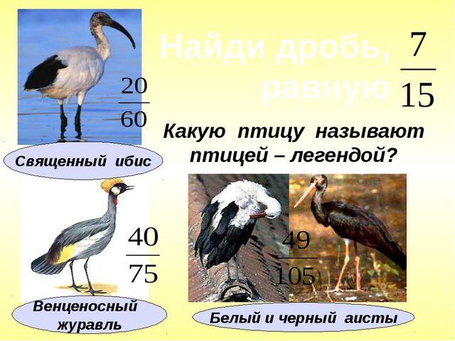 Какую птицу называют птицей – легендой? Найди дробь, равную Белый и черный аи...