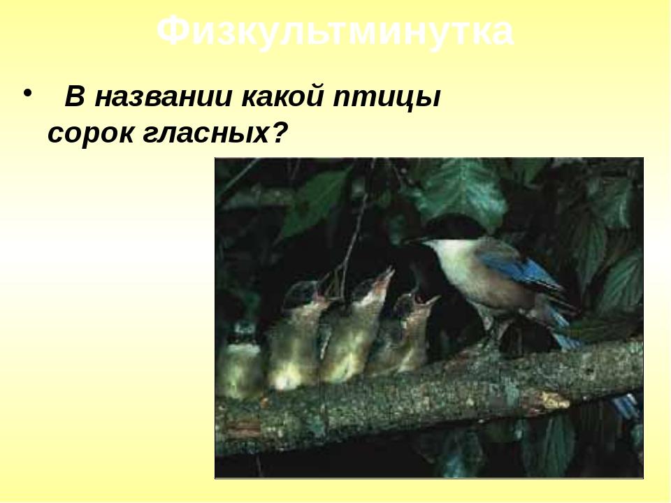 В названии какой птицы сорок гласных? Физкультминутка