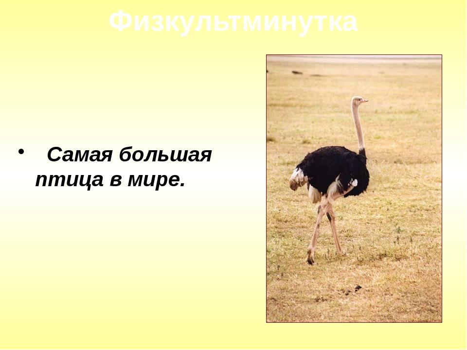 Самая большая птица в мире. Физкультминутка