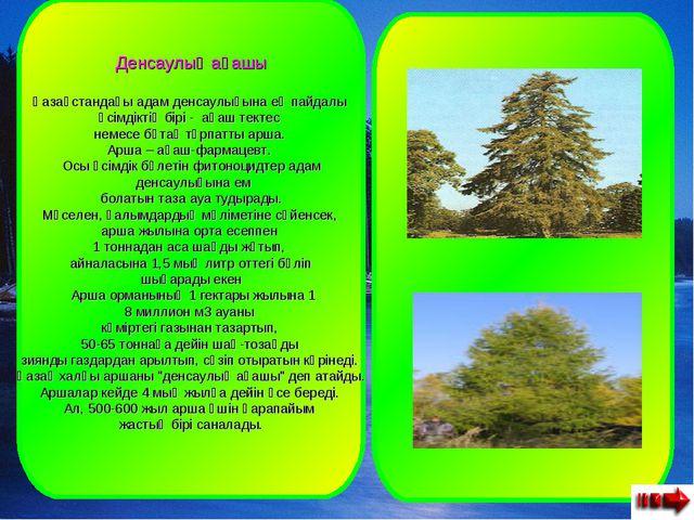 Денсаулық ағашы Қазақстандағы адам денсаулығына ең пайдалы өсімдіктің бірі -...