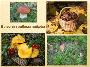 В лес за грибами пойдём