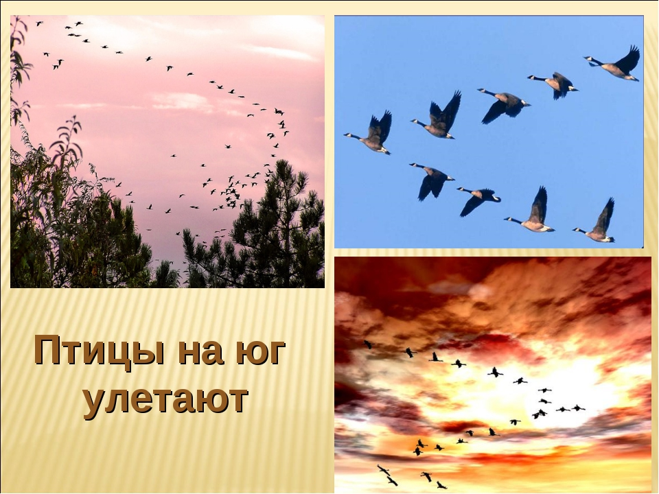 Птицы на юг улетают