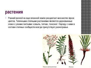 растения Ранней весной на еще влажной земле расцветает множество ярких цветов