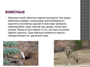 животные Животные степей- обитатели открытых пространств. Они хорошо обеспече