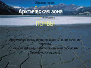 Арктическая зона ПОЧВЫ Арктические почвы почти не развиты, в них почти нет пе