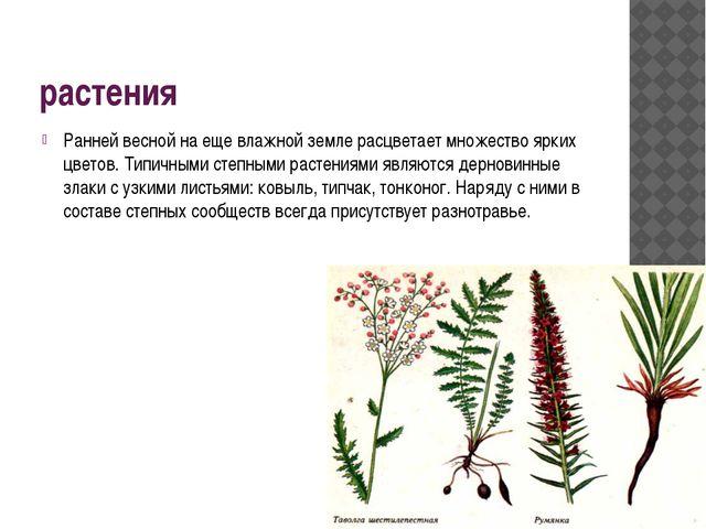 растения Ранней весной на еще влажной земле расцветает множество ярких цветов...