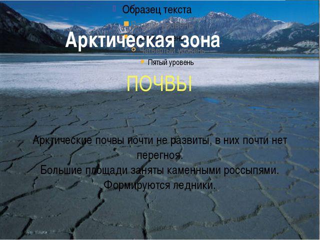 Арктическая зона ПОЧВЫ Арктические почвы почти не развиты, в них почти нет пе...