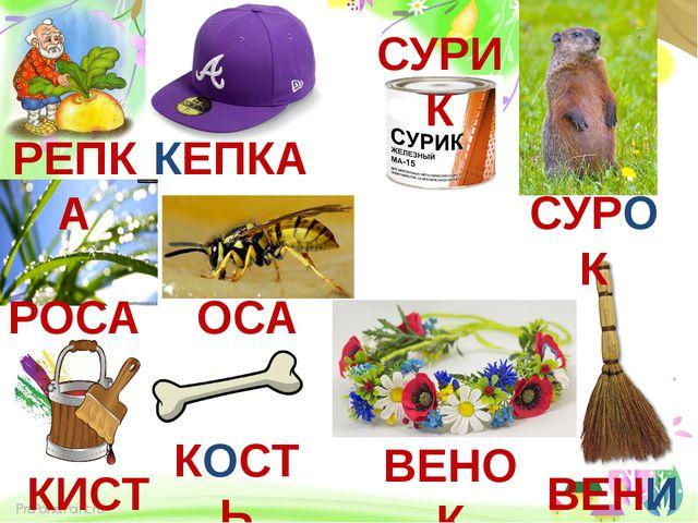 РЕПКА КЕПКА РОСА ОСА СУРИК СУРОК КИСТЬ КОСТЬ ВЕНОК ВЕНИК ProPowerPoint.ru