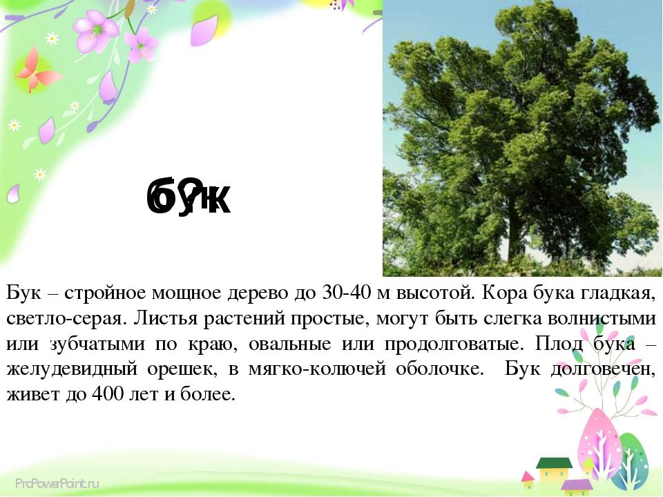 б?к Бук – стройное мощное дерево до 30-40 м высотой. Кора бука гладкая, светл...
