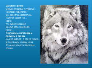 Загадки о волке Серый, страшный и зубастый Произвел переполох. Все зверята ра