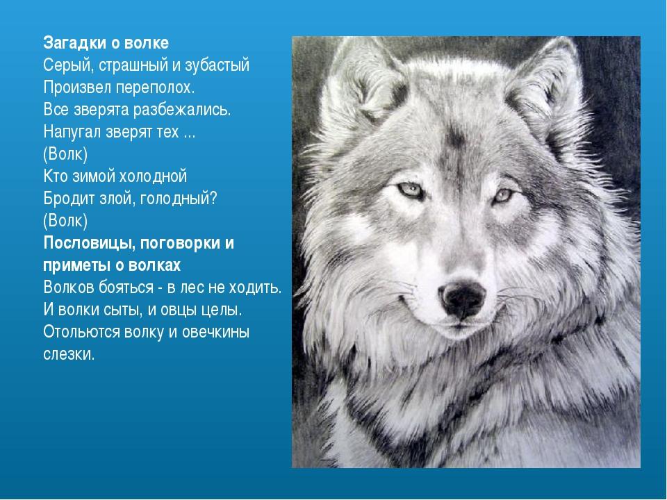 Загадки о волке Серый, страшный и зубастый Произвел переполох. Все зверята ра...