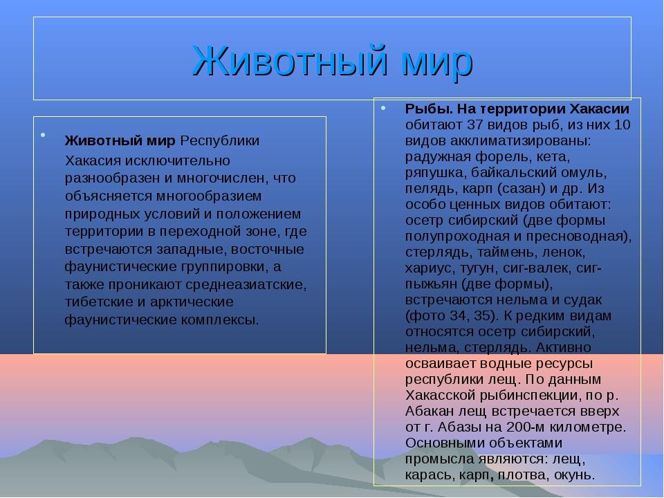 Животный мир Животный мир Республики Хакасия исключительно разнообразен и мно...