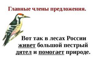 Главные члены предложения. Вот так в лесах России живет большой пестрый дятел
