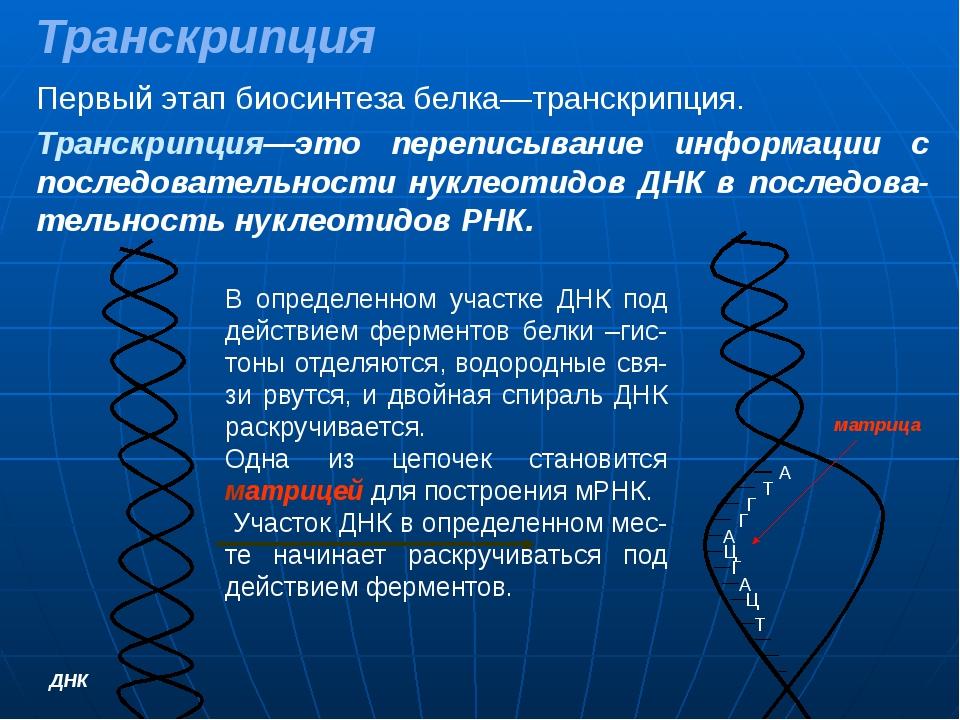 Гдз Биосинтез Белка Характеристика Процессов Транскрипции Трансляции