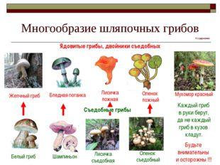 Многообразие шляпочных грибов Ядовитые грибы, двойники съедобных Желчный гриб