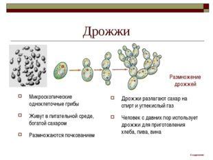 Дрожжи Микроскопические одноклеточные грибы Живут в питательной среде, богато