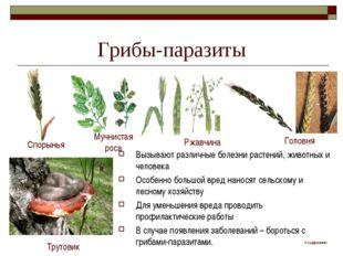 Грибы-паразиты Вызывают различные болезни растений, животных и человека Особе