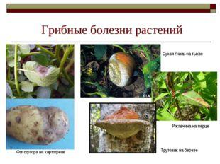 Грибные болезни растений Фитофтора на картофеле Сухая гниль на тыкве Ржавчина