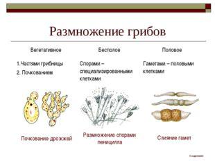 Размножение грибов Почкование дрожжей Размножение спорами пеницилла Слияние г