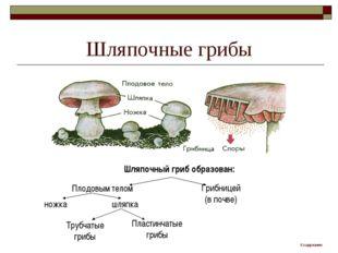 Шляпочные грибы Шляпочный гриб образован: Плодовым телом Грибницей (в почве)
