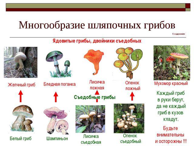 Многообразие шляпочных грибов Ядовитые грибы, двойники съедобных Желчный гриб...