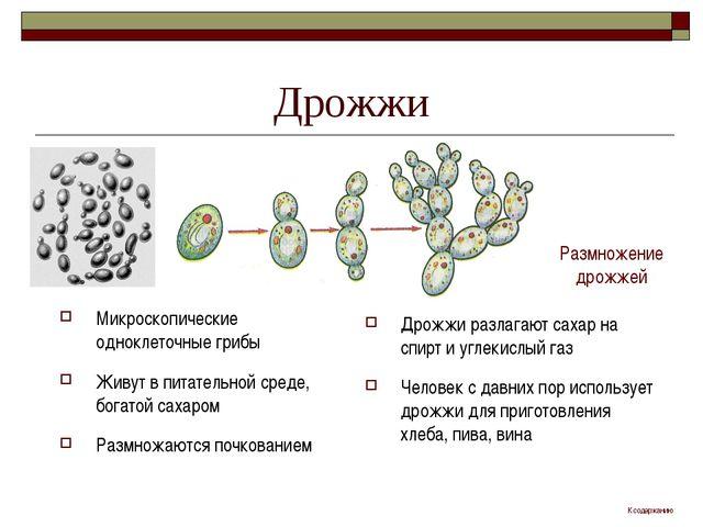 Дрожжи Микроскопические одноклеточные грибы Живут в питательной среде, богато...