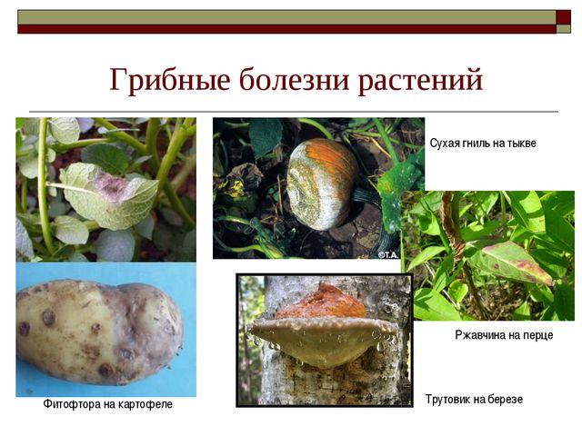 Грибные болезни растений Фитофтора на картофеле Сухая гниль на тыкве Ржавчина...