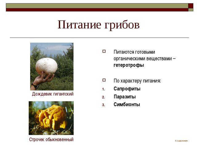 Питание грибов Питаются готовыми органическими веществами – гетеротрофы По ха...