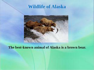 Wildlife of Alaska The best-known animal of Alaska is a brown bear.