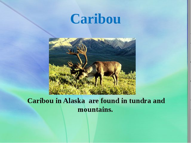Caribou Caribou in Alaska are found intundra and mountains.