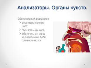 Анализаторы. Органы чувств. Обонятельный анализатор: рецепторы полости носа;