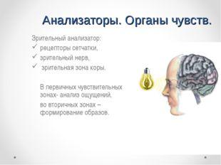 Анализаторы. Органы чувств. Зрительный анализатор: рецепторы сетчатки, зрител