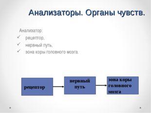 Анализаторы. Органы чувств. Анализатор: рецептор, нервный путь, зона коры го