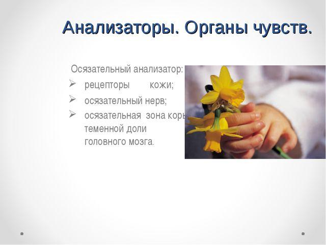 Анализаторы. Органы чувств. Осязательный анализатор: рецепторыкожи; осязате...