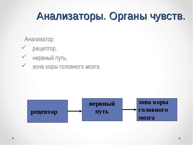 Анализаторы. Органы чувств. Анализатор: рецептор, нервный путь, зона коры го...