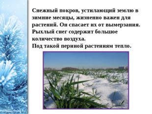 Снежный покров, устилающий землю в зимние месяцы, жизненно важен для растений