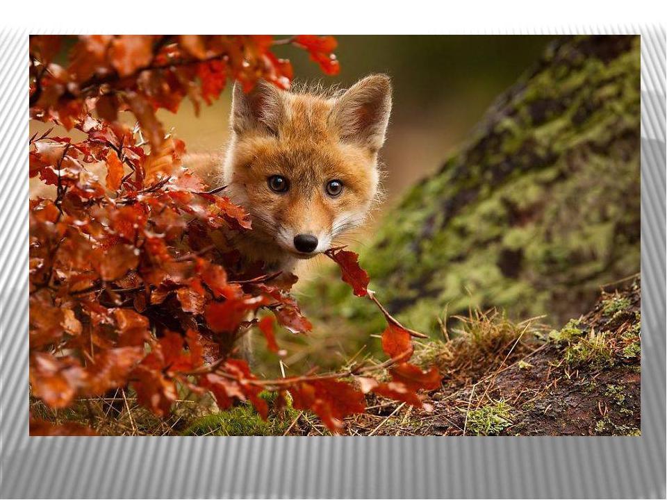 Природа и животные россии фото