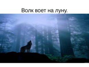 Волк воет на луну.