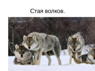 Стая волков.