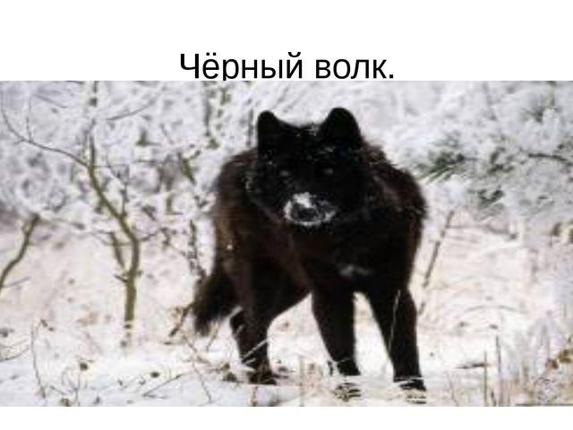Чёрный волк.