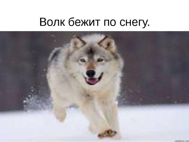 Волк бежит по снегу.