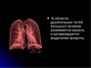 В области дыхательных путей большого сечения развивается кашель и активизиру