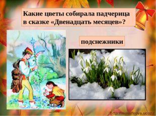 Какие цветы собирала падчерица в сказке «Двенадцать месяцев»? подснежники htt