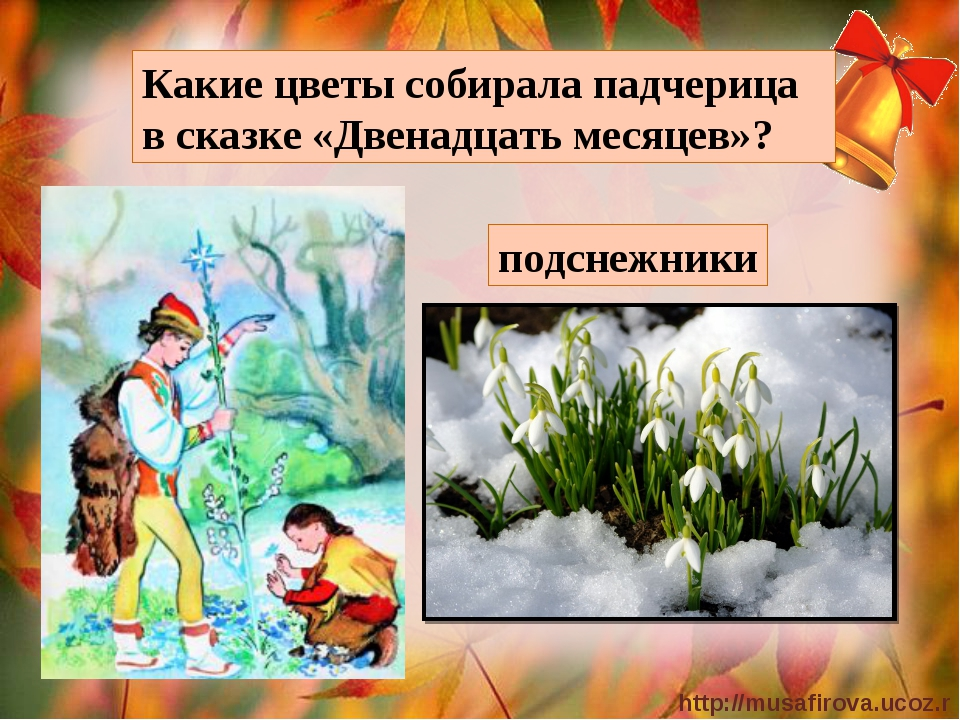 Какие цветы собирала падчерица в сказке «Двенадцать месяцев»? подснежники htt...
